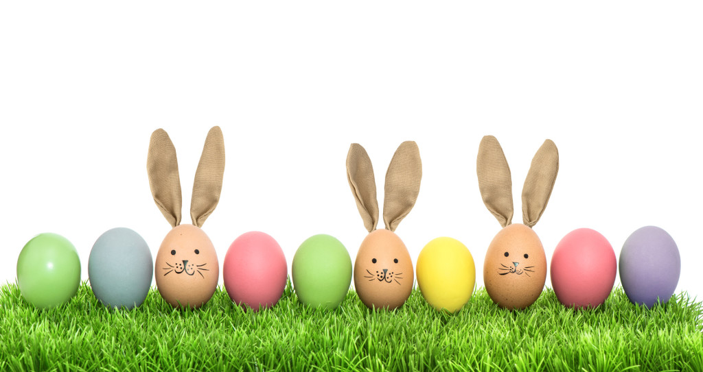 Colorful funny bunny easter eggs in green grass over white background